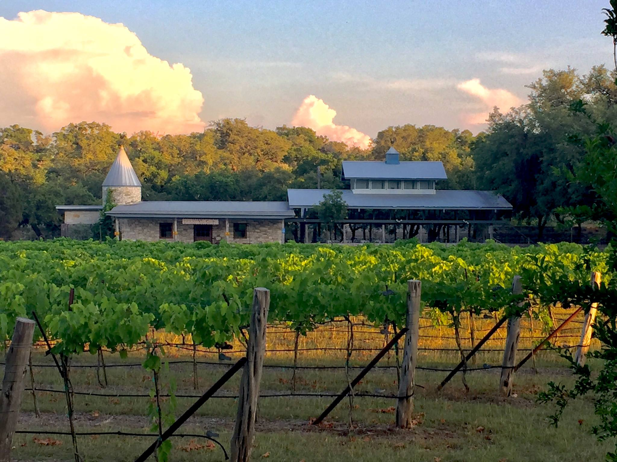 """A Texas original offering beautiful vineyards, great wine and a memorable time. Hidden off of 46, just a few short miles from New Braunfels, you will find our tasting room tucked behind rows of vineyards. Grown on the estate is our pioneer grape """"Black Spanish"""". Before or after your tasting find the perfect spot under the oaks to enjoy your wine. If you are joining us on the weekend kick back and relax as you listen to live music while enjoying a meal from the food truck."""
