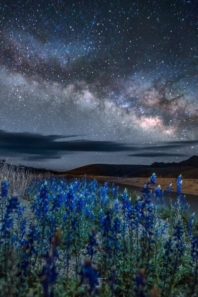 Milky Way at night above a field of bluebonnet flowers highlight a stargazer's paradise