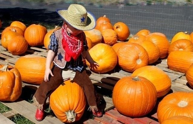 Young Cowpoke Riding a Pumpkin