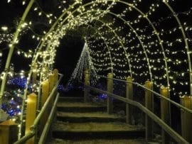 The gardens and trails at the EmilyAnn Theater transform into a magical holiday light display